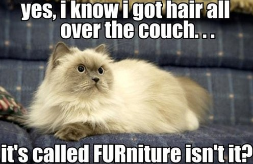 Hairy Furniture
