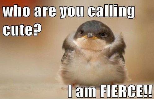 I'm Fierce!