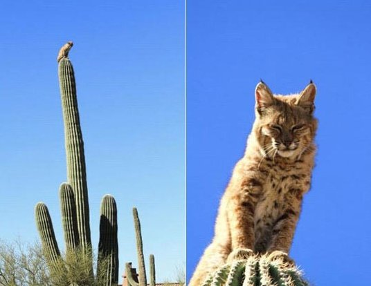 Lord of the Cacti