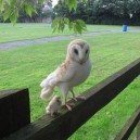 Mom and Baby Owl