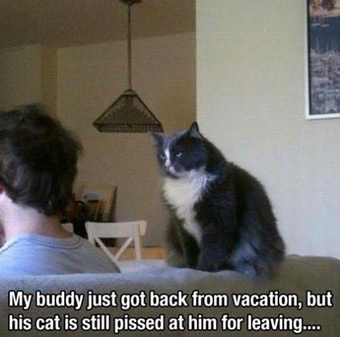 Pissed cat