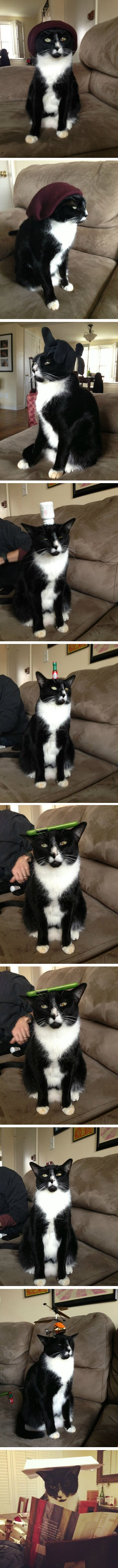 Put things on your cats head