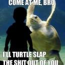 Taste the turtle wrath bro