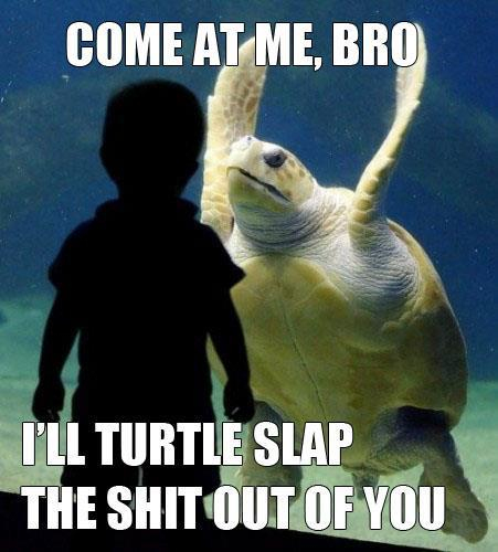 Taste the turtle wrath bro