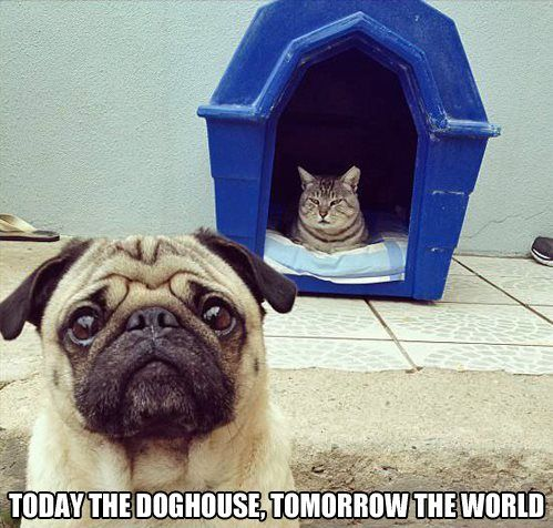 Today the doghouse…
