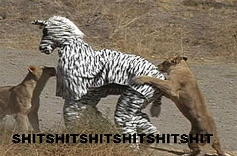 Why dressing up as a Zebra is a bad idea