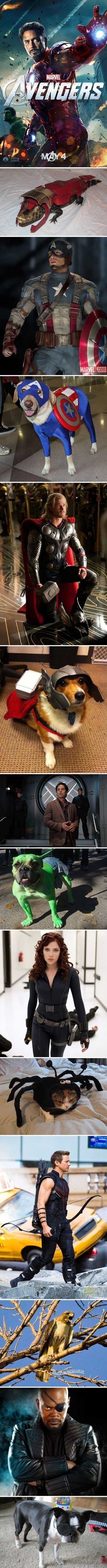 Avengers And Their Pets