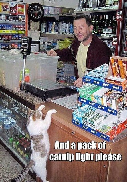 Cat in the store