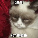 Cat is not amused