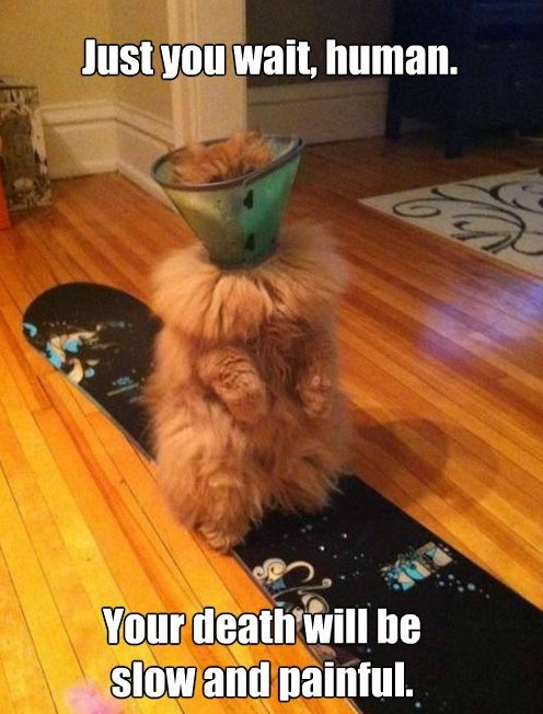 Cone Cat Is Not Amused