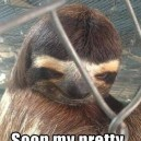 Creepy Sloth