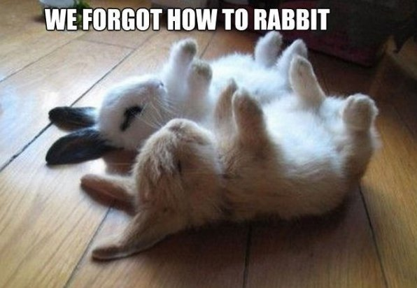 Forgott how to Rabbit