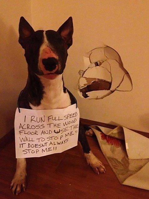 Funny LOLDog