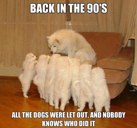 Funny Storytelling dog