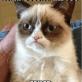 Grumpy Cat is Very Grumpy