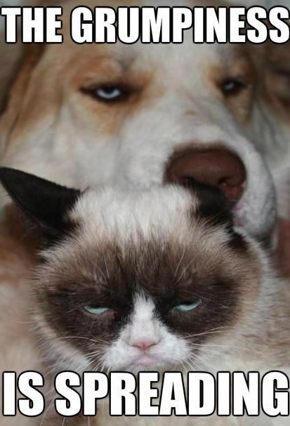 Grumpy cat and grumpy dog