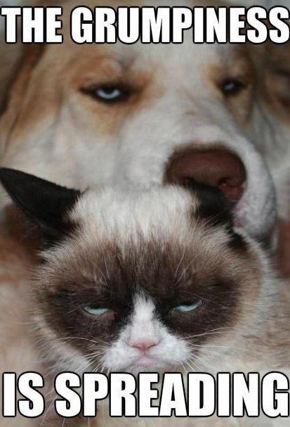 Grumpy cat and grumpy dog