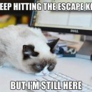 Grumpy cat trying to escape