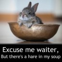 Hare in my soup