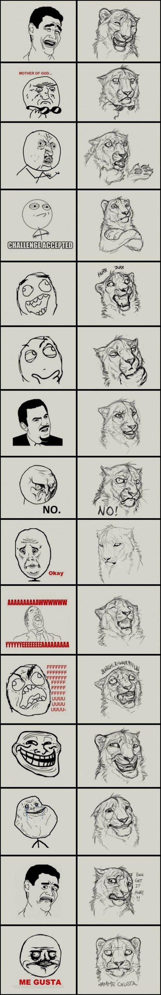 Jungle memes