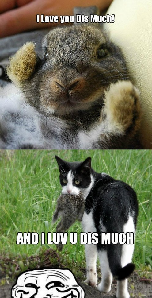 Loving Bunny | Funlexia - Funny Pictures
