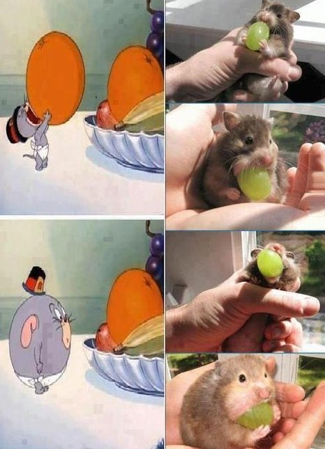 Mouse eats a grape
