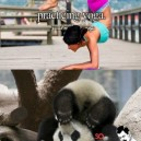 Panda Can't Do Yoga