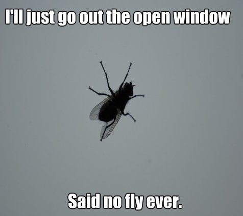 Retarded fly