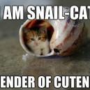 Snail Cat