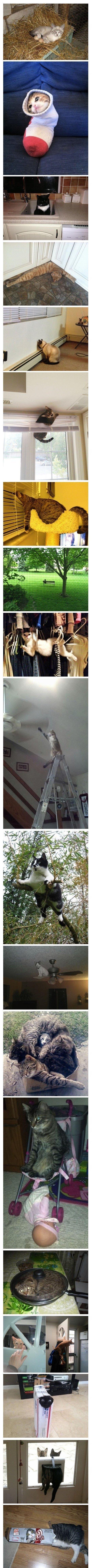 Socialy Awkward Cat