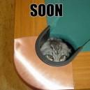 Soon Cat
