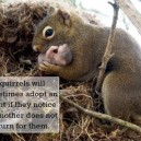 The kindness of squirrels
