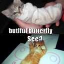 The transformation of a kitty