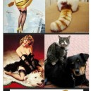 Vintage photos and cats