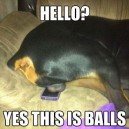 Yes, this is balls