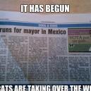 Cats Are The Future