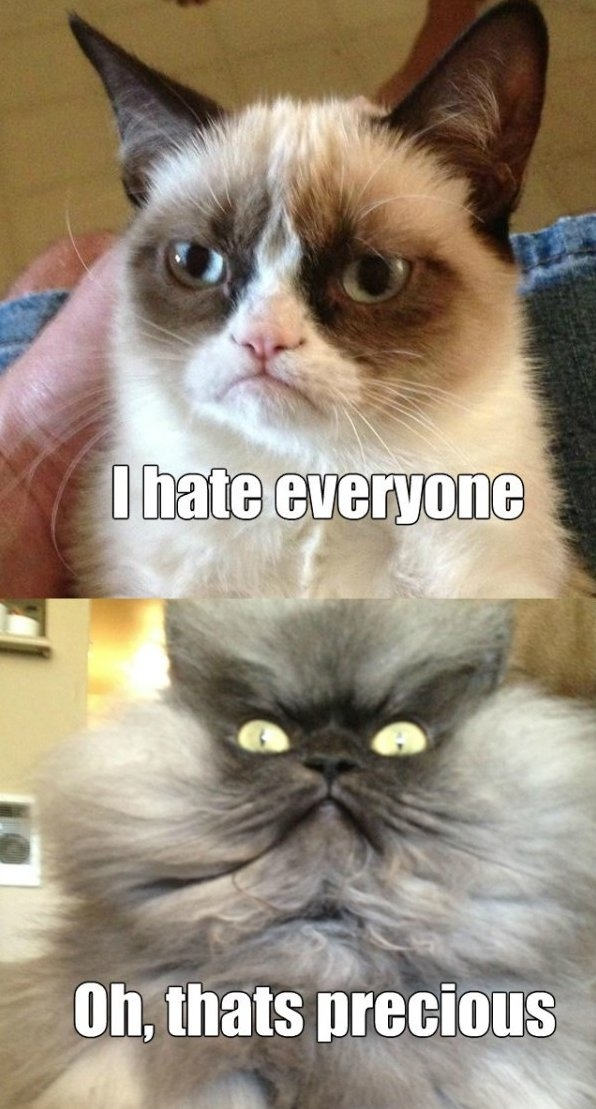 Colonel Meow Is Not Amused | Funlexia – Funny Pictures