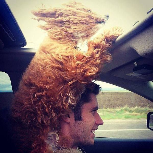 Dog Enjoying the Ride!