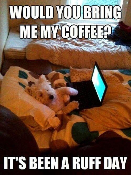 Dog Wants a Coffee