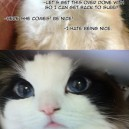 Even Grumpy Cat Is Charmed