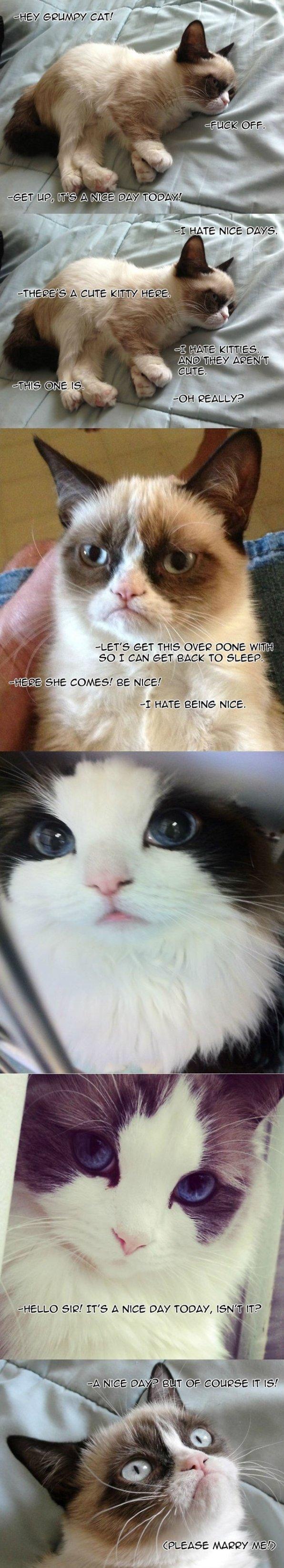 Even Grumpy Cat Is Charmed