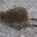 Funny Friday