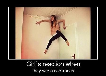 Girls and Cockroaches
