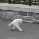 Google Streetview Makes A Creepy Half Cat