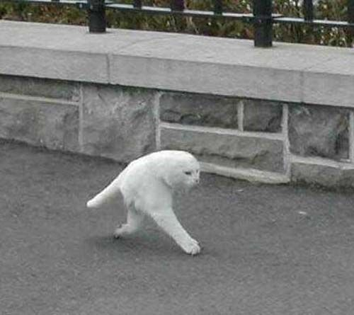 Google Streetview Makes A Creepy Half Cat