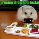 Hip Hamster