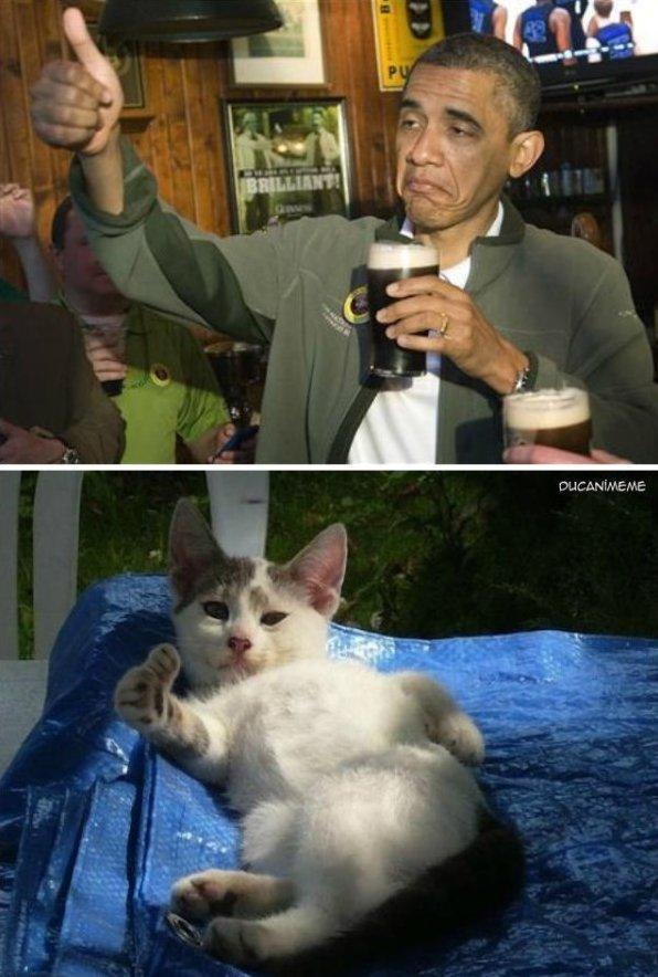 Obama vs. Cat