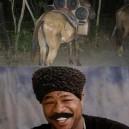 Pimp My Mule