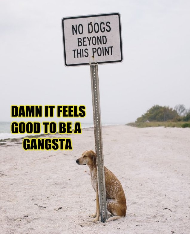Real Gangsta