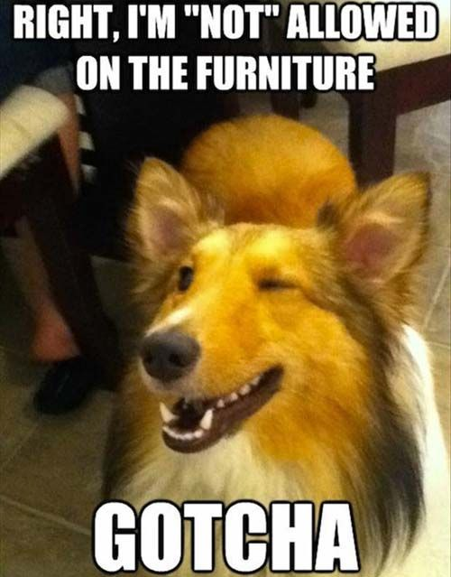 Sarcastic Dog
